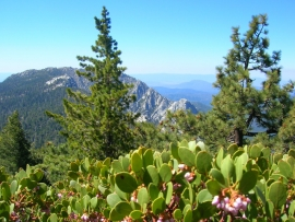 pacific-crest-trail-07
