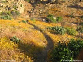 pacific-crest-trail-08