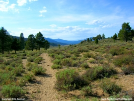 pacific-crest-trail-23