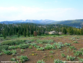 pacific-crest-trail-51