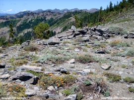 pacific-crest-trail-55