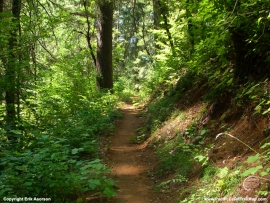 pacific-crest-trail-64
