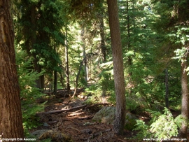 pacific-crest-trail-68