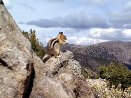 tahoe-rim-trail-09