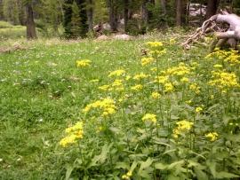 tahoe-rim-trail-12