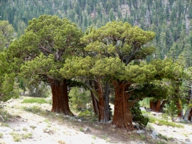 tahoe-rim-trail-13