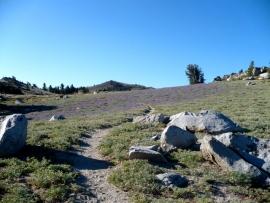 tahoe-rim-trail-27